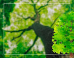 Деревья лиственные