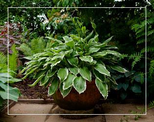 Контейнерные растения